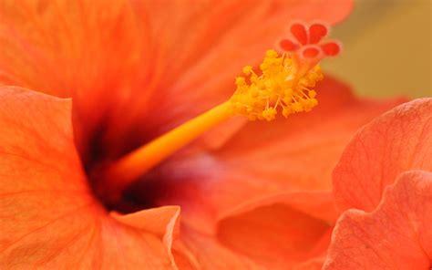 picallscom orange flower  badh