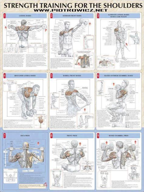 shoulder workout strength shoulders workouts