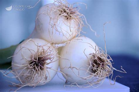 cucinare cipollotti ingrediente cipollotti le ricette dello spicchio d aglio
