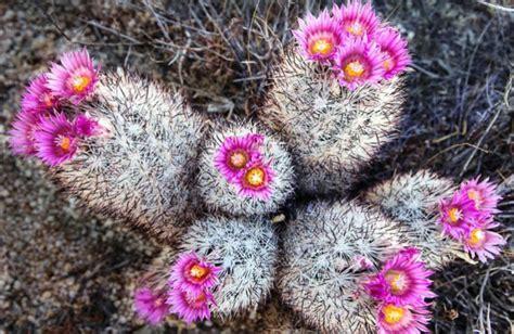 Kaktus Hias Tanpa Media macam macam tanaman kaktus hias dan peluang bisnis kaktus mini