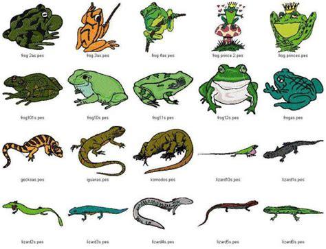 imagenes de animales reptiles cuales son los reptiles con nombres imagui