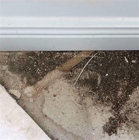 ants  termites dirt collecting   floor  windowsill