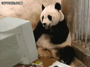 Sex Panda Meme - computer ship it gif find share on giphy