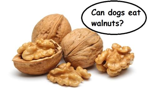 can dogs eat acorns can dogs eat nuts like almonds cashews pecans peanuts acorns and walnuts