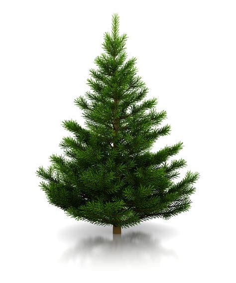 christmas tree websites merry christmas and happy new