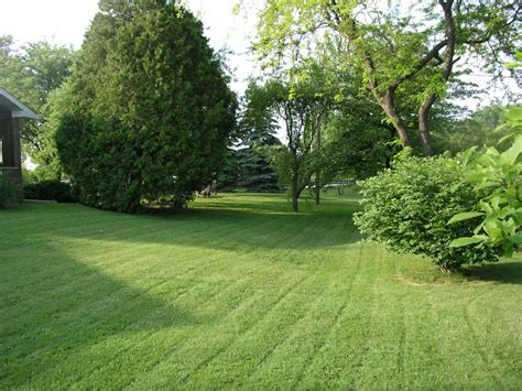 backyard grass backyard from turf and tree llc insured lawn care service