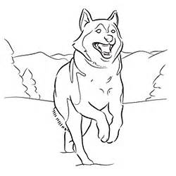 coloring pictures of huskies siberian husky coloring page coloring pages for adults