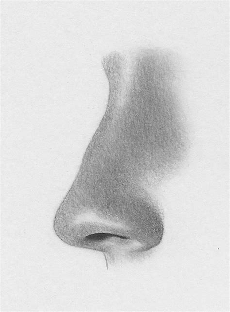 Sketches Nose by How To Draw Clean Nose