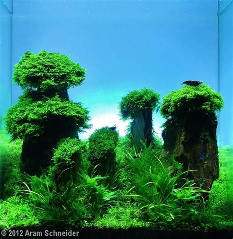 aquascaping tall tanks 36 best aquascaping tall tanks images on pinterest aquarium ideas planted aquarium
