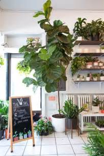 the best indoor plants the easiest indoor house plants that won t die on you