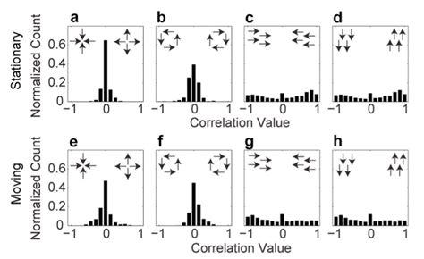 pattern image correlation developmental dev prosem 2015 09 16 rmd at master 183 psu