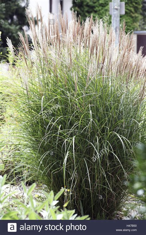 Garden Decoration Grass by Grasses Shrub Grass Ornamental Grass Garden High