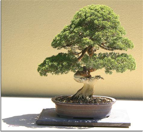 arboles bonsai los peque 237 177 os taringa diseno casa