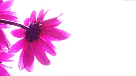 white and pink white and pink abstract desktop backgrounds