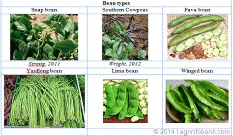 types of garden peas beans agriculture information bank