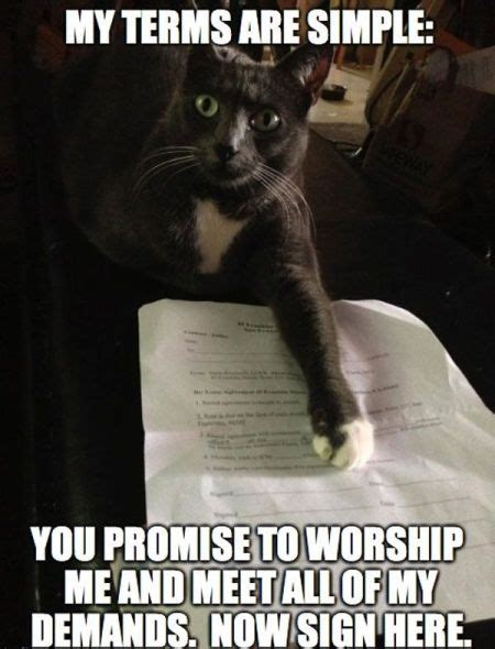 Cat Meme Pictures - funny feline thursday when the cats rule the roost pmslweb