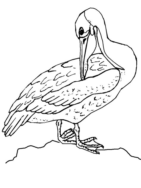 free birds and fish coloring pages