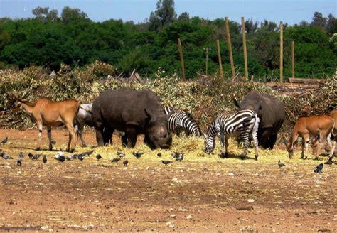 Google Tel Aviv panoramio photo of safari ramat gan