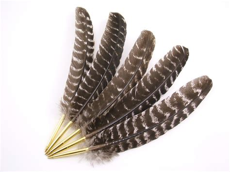Turkey Feather turkey feathers related keywords turkey feathers keywords keywordsking