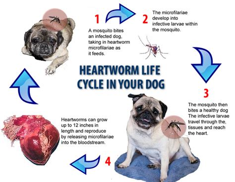 heartworm prevention pet talk in illinois