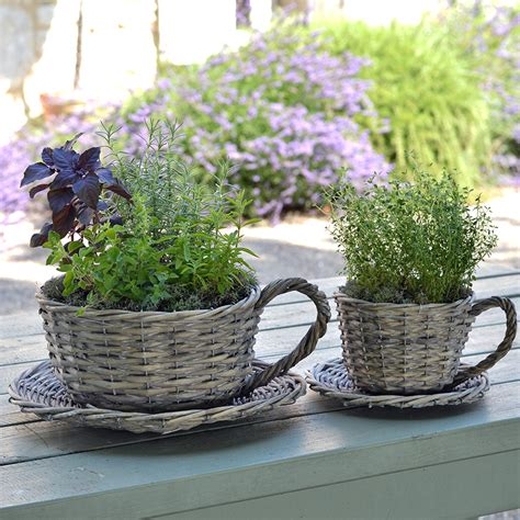 Teacup Planters by 2 Willow Teacup Planters