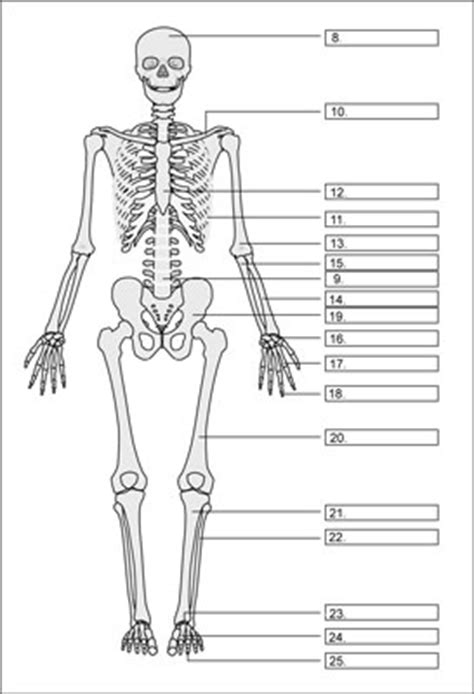 Kerangka Manusia jenis penyusun kerangka tulang manusia sridianti