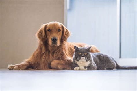 getting puppies 8 tricks to help your cat and to get along mental floss