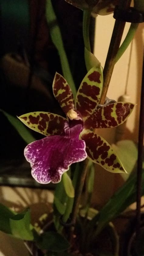 orchid in bloom by waltervd on deviantart
