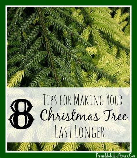 8 ways to make your christmas tree last longer