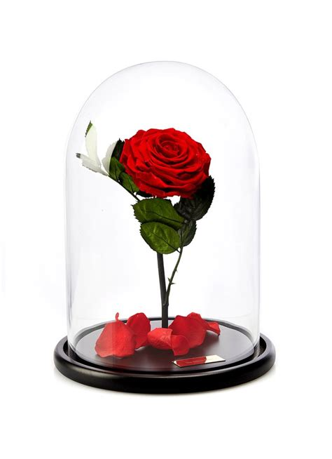 enchanted rose that lasts a year the enchanted rose real rose that last one year the