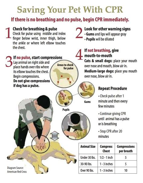 heimlich for dogs free printable pet cpr and emergency pet