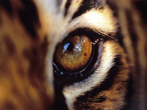 imagenes ojos de animales ojos de animales im 225 genes taringa
