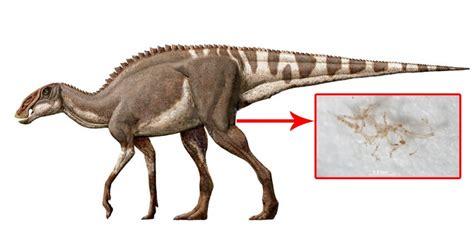 lunghezza vasi sanguigni isolato il sangue di un dinosauro vecchio 80 milioni di