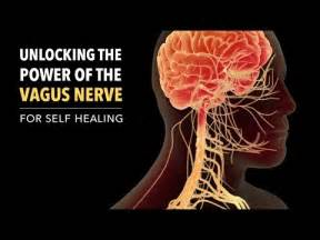 accessing the healing power of the vagus nerve self help exercises for anxiety depression and autism books unlocking the power of the vagus nerve