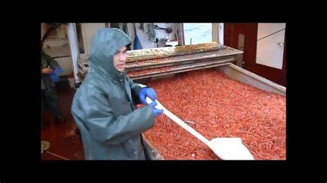 shrimp boat song youtube shrimp fishing 2012 doovi
