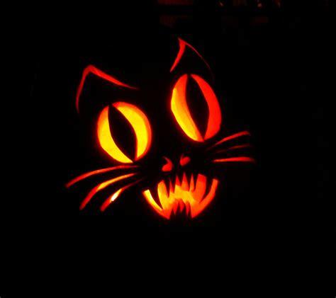 cat pumpkin dutchbaby stanford pumpkin 2009