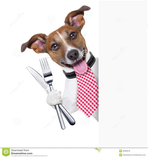 with dogs hungry royalty free stock photos image 32963078