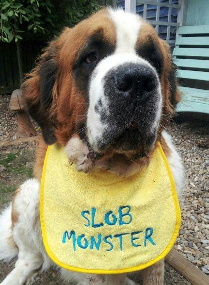 st bernard puppies rescue 17 best images about dogs st bernards so lovable on