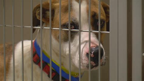 bakersfield shelter kern county animal services builds support to become no kill shelter news