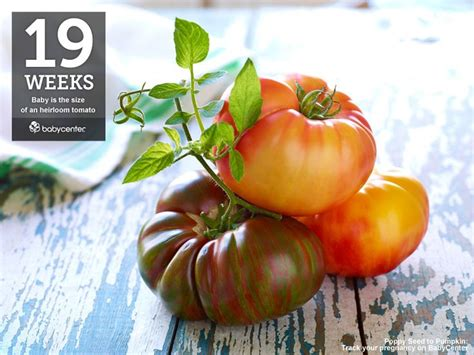 fruit 19 weeks fruit and veggie comparisons how big is your baby