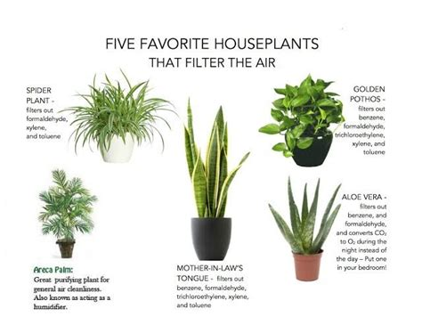 indoor plants india let s breathe clean air indoor air purifying plants in gurgaon
