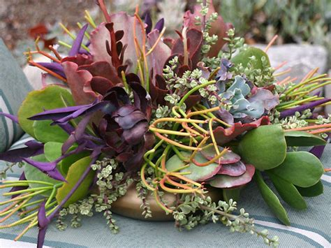 Succulent Centerpieces Hgtv Succulent Plant Centerpiece