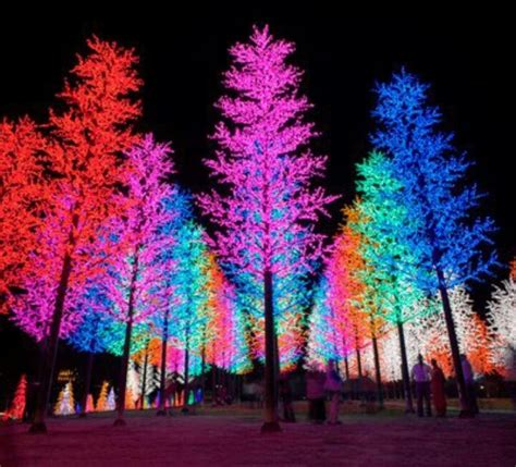 Multi Colored Christmas Trees Holidays Are Coming To Multi Color Tree