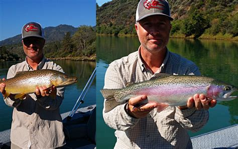 service northern california northern california fly fishing guide service shasta trout autos post