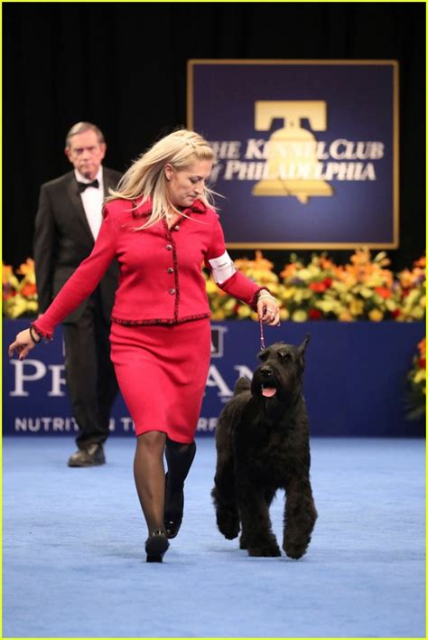 purina show who won best in show at the purina national show 2016 photo 3815149