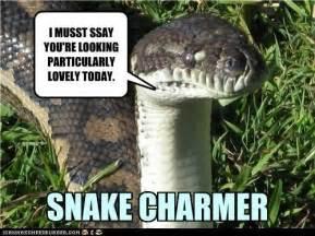 Snake Meme - snake charmer meme slapcaption com snake pinterest