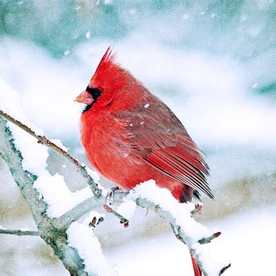 the not so complete birds afoul of america books the cardinal bird usa of bird
