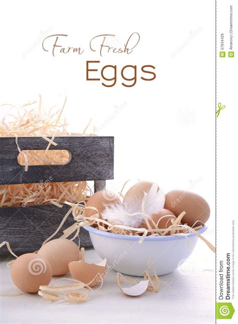 Farm Fresh Eggs Shelf by Farm Fresh Eggs On White Background Stock Photo Image