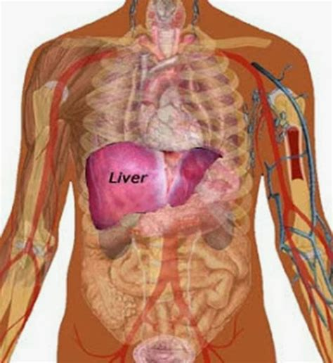 Doctor That Has Liver Detox by Here Is How To Cleanse Your Liver Naturally Dr Clark
