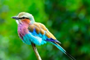 colorful birds most spectacularly colorful animals webjazba science